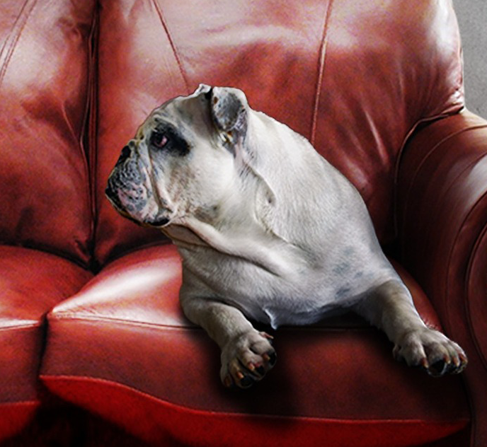 Should Real Estate Agents Incorporate Pets Into Their Marketing