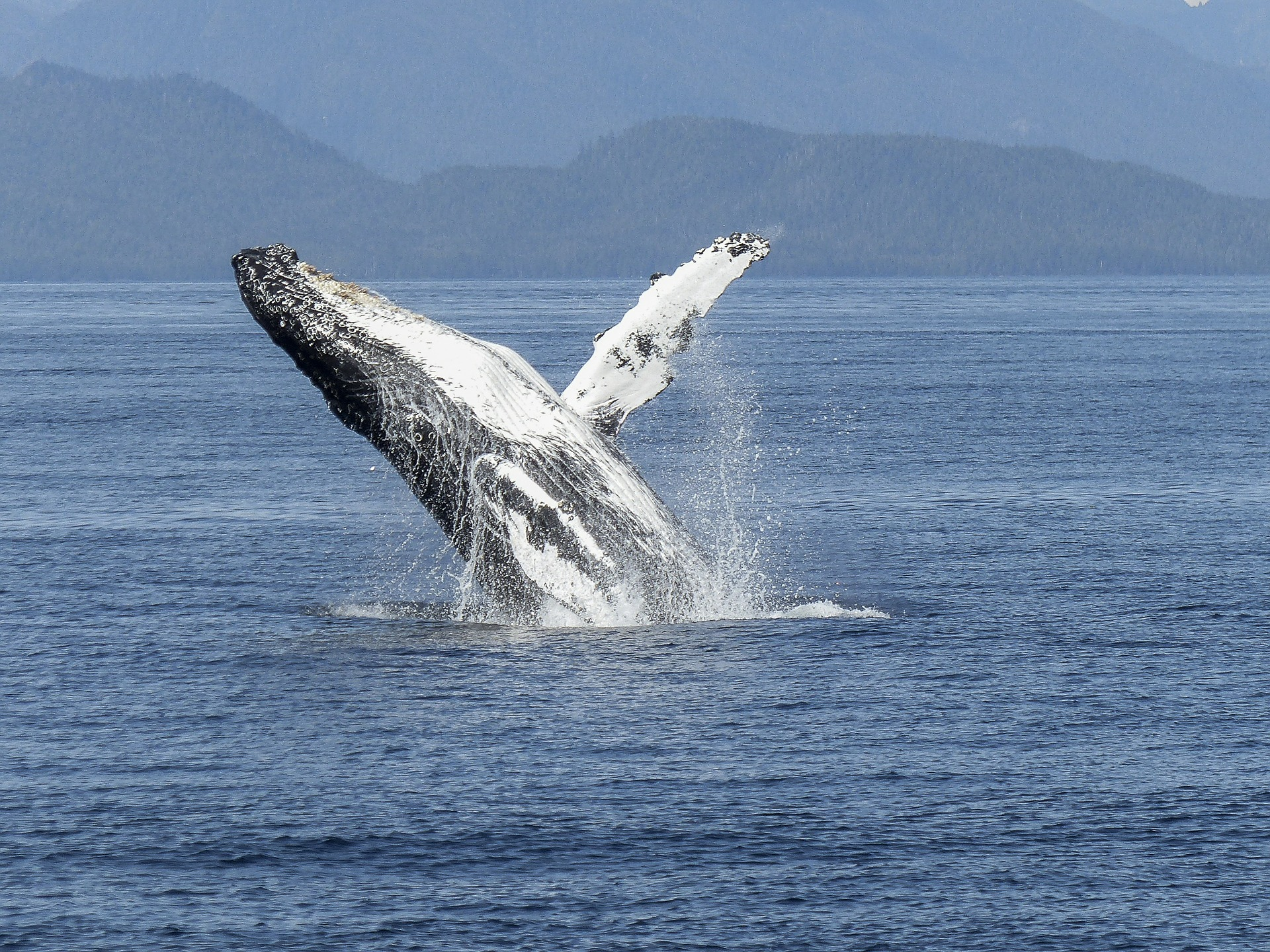 friday freebies whale time.jpg